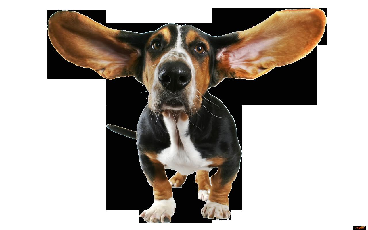 Pensiune canină şi dresaj pentru cățeii fericiți